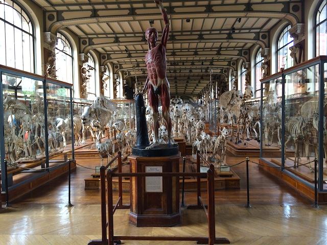 Promenade sur les bords de Seine Muséum d'histoire naturelle