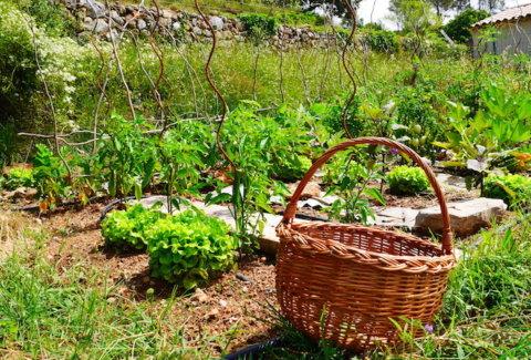 potager provençal